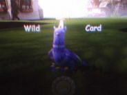 Wildcard Pudgeon